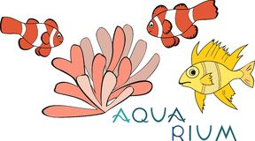 Tropical Fish and actinium Royalty Free Stock Photo