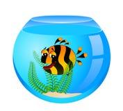 Tropical fish in aquarium Stock Photos