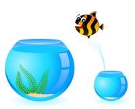 Tropical fish in aquarium Stock Image