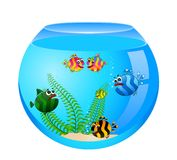 Tropical fish in aquarium Stock Photos