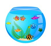 Tropical fish in aquarium Royalty Free Stock Photos
