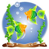 Tropical Fish Aquarium Clipart Royalty Free Stock Photos