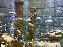 Tropical fish in aquarium with Egypt statue Stock Photos