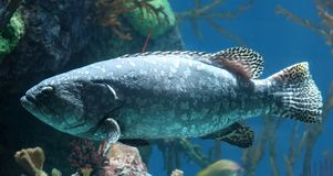 Tropical fish in aquarium at ocean, sea salt creature. Big fish in aquarium beautiful animal at ocean. Unique marine animal stock image