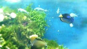 Tropical fish in aquarium stock video footage