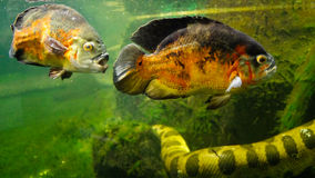 Tropical fish and aquatic snake Royalty Free Stock Photography