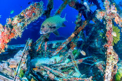 Tropical fish around metal wreckage Royalty Free Stock Photos