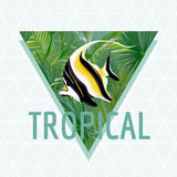 Tropical Fish Background Summer Design, T-shirt Fashion Exotic Graphic. Stock Image