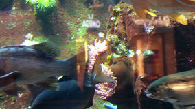 Tropical fish background. Fish tank exotic colorful backdrop stock footage