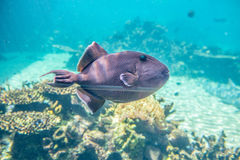 Tropical fish. It is a beautiful tropical fish stock images