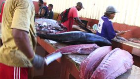Fishmongers market in tropical Anerman Islands. Tropical fish being filleted and prepared for sale stock footage