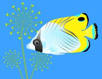 Tropical Fish on Blue Stock Photo