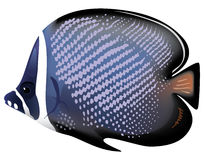 Tropical fish Chaetodon collare. Vector illustration Royalty Free Illustration