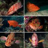 Tropical fish collection stock images