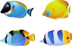Tropical fish collection Royalty Free Stock Photos