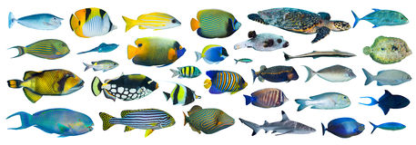 Tropical fish collection Royalty Free Stock Images