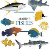 Tropical fish collection marine Stock Photos