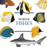 Tropical fish collection marine Stock Photo