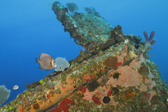 Tropical Fish and Coral Encrusted Shipwreck - Roatan, Honduras Stock Images