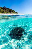 Tropical fish and coral in Maldives Royalty Free Stock Photos