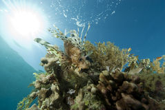 Tropical fish and coral reef Stock Photography