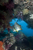 Tropical fish and Coral Reef. Stock Photos