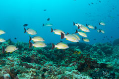 Tropical fish and coral reef. A colourful reef with tropical fish in it stock photos