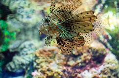 Tropical Fish on a coral reef Stock Photography