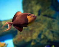 Tropical Fish on a coral reef Stock Image