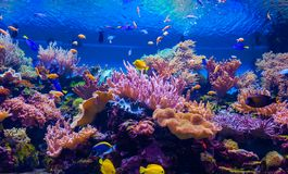 Tropical fish on a coral reef.  Stock Photos