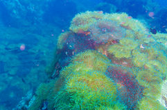 Tropical Fish on Coral Reef for diving at South West Pinnacle on Stock Images