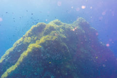 Tropical Fish on Coral Reef for diving at South West Pinnacle on Royalty Free Stock Photography