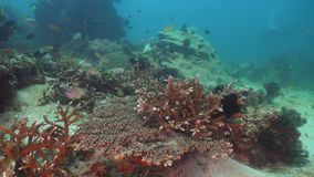 Coral reef and tropical fish. Philippines, Mindoro. stock video footage