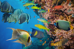 Tropical Fish and Coral Reef. On Red Sea Royalty Free Stock Photos