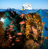 Tropical Fish and Coral Reef. On Red Sea Stock Photo