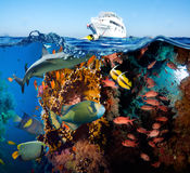 Tropical Fish and Coral Reef. On Red Sea Stock Images