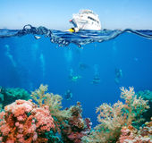 Tropical Fish and Coral Reef. On Red Sea Stock Photography
