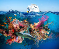 Tropical Fish and Coral Reef Stock Photo