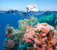 Tropical Fish and Coral Reef Royalty Free Stock Photos
