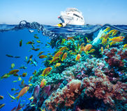 Tropical Fish and Coral Reef Stock Images