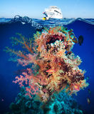 Tropical Fish and Coral Reef. On Red Sea Stock Image