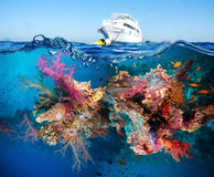 Tropical Fish and Coral Reef. On Red Sea Stock Photos