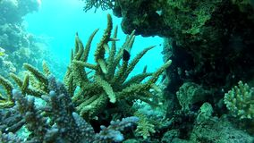 Tropical fish. Coral reef. Of the red sea. Summer. Clean water. Beautiful Coral Reef. Snoring stock footage