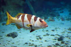 Tropical Fish on a coral reef. Under the sea water Stock Photo