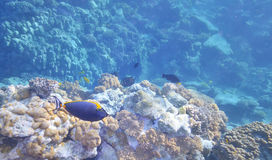 Tropical Fish and Coral Reef. In warm water Stock Photos