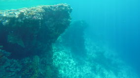 Tropical fish and coral reefs. Beautiful corals. Life in the ocean stock footage
