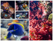 Tropical fish and coral reefs. Set of pictures Stock Photography