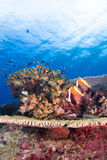 Tropical fish and coral Royalty Free Stock Photo