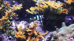 Tropical fish stock video