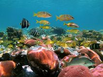 Tropical fish in corals Stock Photography